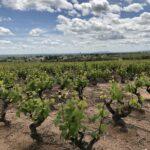 Vignoble de Moulin à Vent